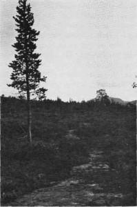 De gamle farveiene tegner ennå sitt utydelige spor i fjellet. Fra Roltdalen.