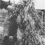 Beret Anna Mebust legger øverste kornbandet på stauren.