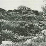 / forbindelse med arkeologiske undersøkelser rundt Kvernfjellvatna sommeren 1976 fant forfatteren sammen med førstekonservator Kristen Møllenhus ruinene av tre «hytterbyer» ved Store Kvernfjellvann: ved Rensbekkosen, på Lappen og i Kogdalen (Koiedalen). Ruinene er utvilsomt spor etter de eldste kvemfjellstuer og er av en helt annen type enn den senere «felstoggo». Veggene i hyttene eller koiene var murt av stein og var ca. 4x4 alen innvendig målt. Hyttene lå vegg i vegg i «byer» med fra 15 til 30 hus, den største (og kanskje eldste?) samlinga i Kogdalen. En overflatisk undersøkelse tyder på at bare enkelte hytter - én i hver «gate» - har hatt ildsted, trass i at dette må ha vært vinterboliger. Anleggenes alder og særegenhet gjor at de bør undersøkes nærmere ved utgravning - og bevares. Faktisk kan dette være de eldste bevarte spesialiserte «arbeiderboliger» i landet. Bildet viser murene av tre hytter på Lappen. Foto Kr. Møllenhus.