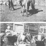 Det var seterdrift i RoltdÅlen gjennom flere hundreår. Eneste måten for frakting, var kløvjing, og som vi ser, både med hest og ku.