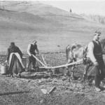 Første året de brukte ard under potetsettinga på Fuset - 1922. Ragnhild og John og sønnen Sakarias.